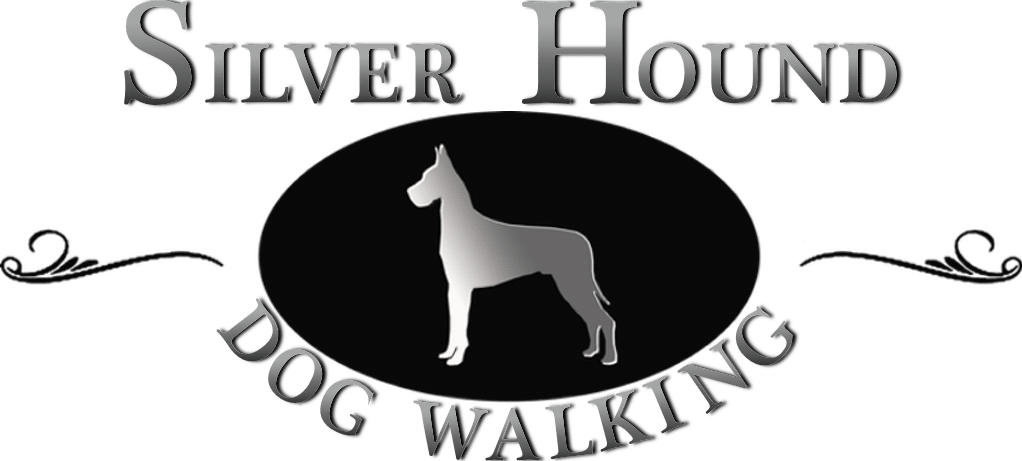 Silver Hound Dog Walking & Cat Sitting